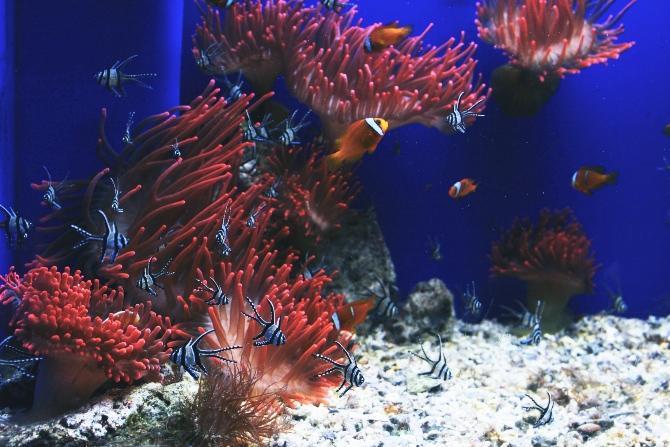akvarijum 2 1 Inspiracija za malo drugačije uređenje enterijera: Šta ti sve treba za dobar akvarijum