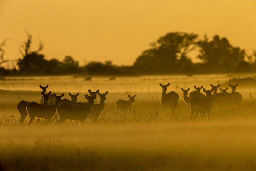 DivineJourney 104 OkavangoRiverOfDreams 25 min 1024x682 National Geographic obeležava 50. godišnjicu Dana planete Zemlje