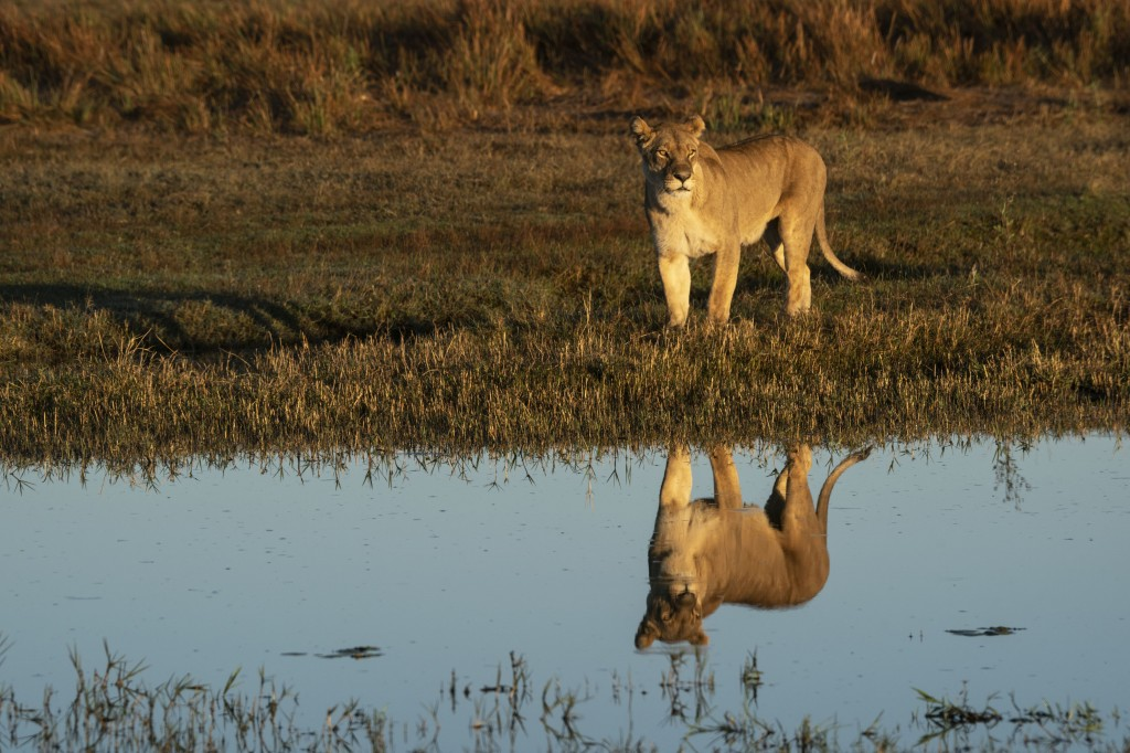 DivineJourney 104 OkavangoRiverOfDreams 27 min 1024x682 National Geographic obeležava 50. godišnjicu Dana planete Zemlje